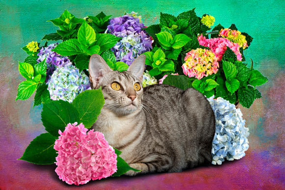 Cat in the Flowers